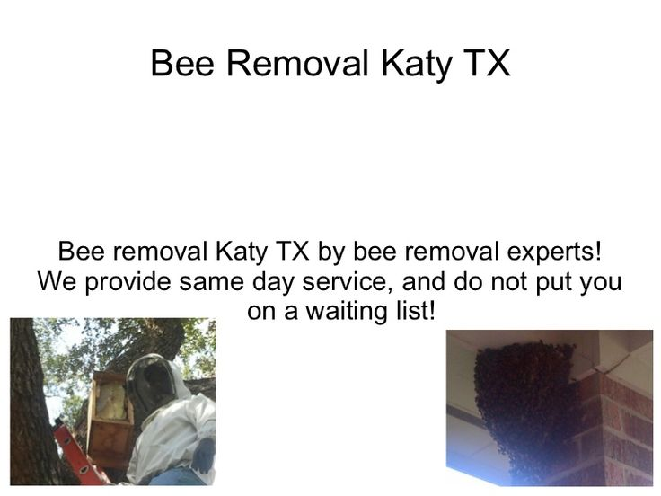 Bee Removal Katy TX Bee removal in Katy TX done by Experts in bee removal!  We have over 50 years combined experience in this industry and take bee removal ser…