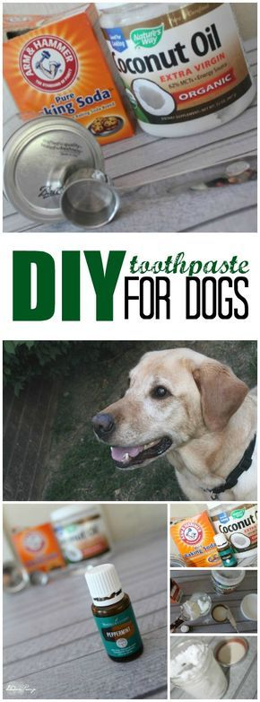 Natural Ways To Remove Oil From A Dog S Fur