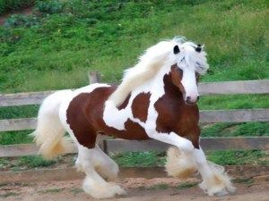Cavalo egípcio (www.eface.in)