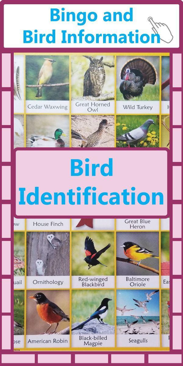 Bird Identification For Kids Bingo For Kids Bird Identification Information About Birds