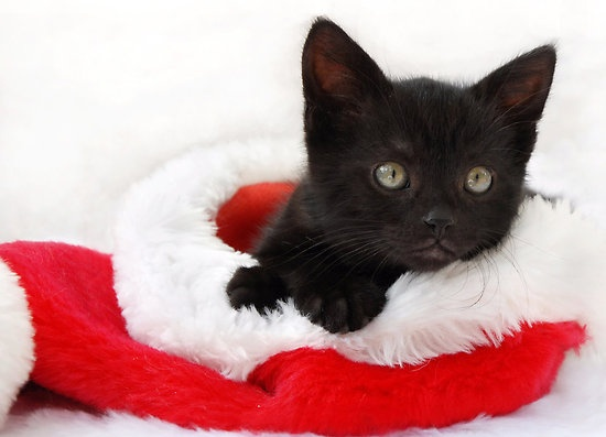 Adorable! I want to snuggle with this kitten! :)