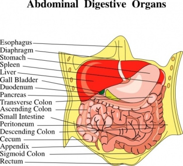17 Best Images About Referred Pain  Abdominal Quadrants On
