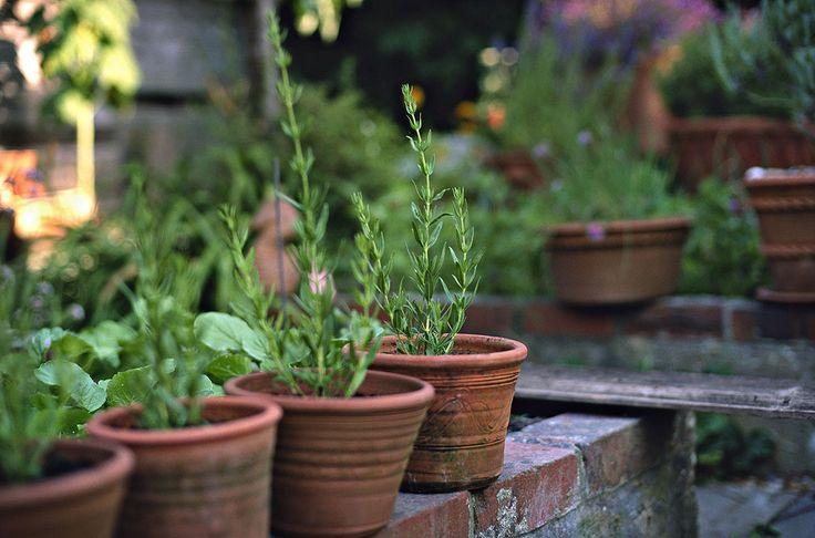 Vous avez deux bons mois entre fin juillet et fin septembre, pour bouturer vos arbustes préférés. C'est l'époque où vos chances de réussite sont maximales... profitez-en !