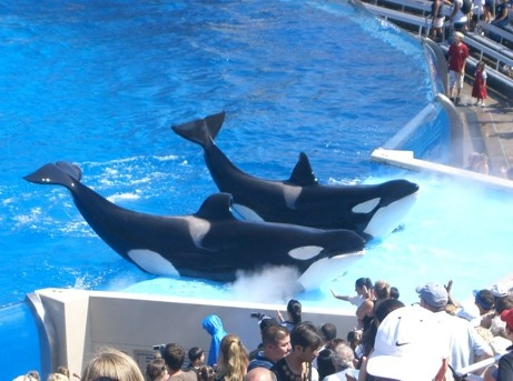 49 Best Images About Sea World Orlando On Pinterest Cove