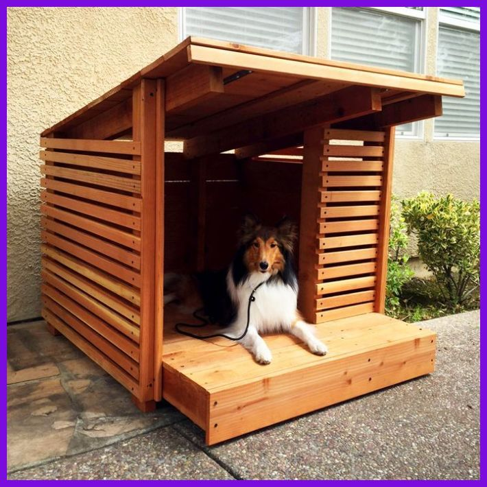 Discover How To Develop A Dog Home With An Optional Sun Deck With