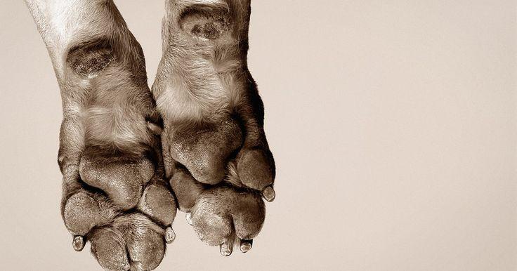 Infecciones en las uñas de los perros. Si has notado que una uña de tu perro se ve inflamada o irritada, hay una gran posibilidad de que tenga una infección. Los dedos de las patas de los perros desarrollan infecciones por una variedad de razones, la mayoría de las cuales requieren atención veterinaria. Las infecciones pueden agravarse, si no se tratan, por lo que es importante buscar ...