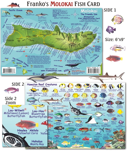 1000 images about hawaii fish cards on pinterest for Molokai fish and dive