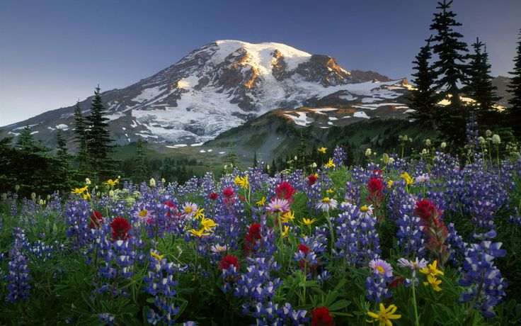 mountains-and-flowers.jpg (2560×1600)