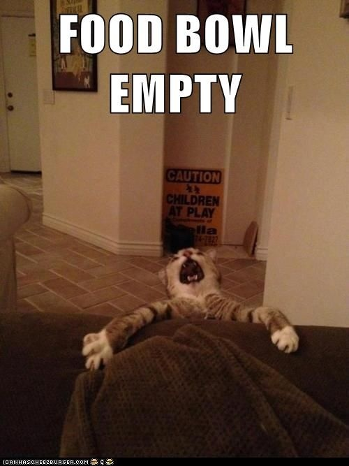 cats are hilarious (food,bowl,empty,cat,hilarious,meow,funny)