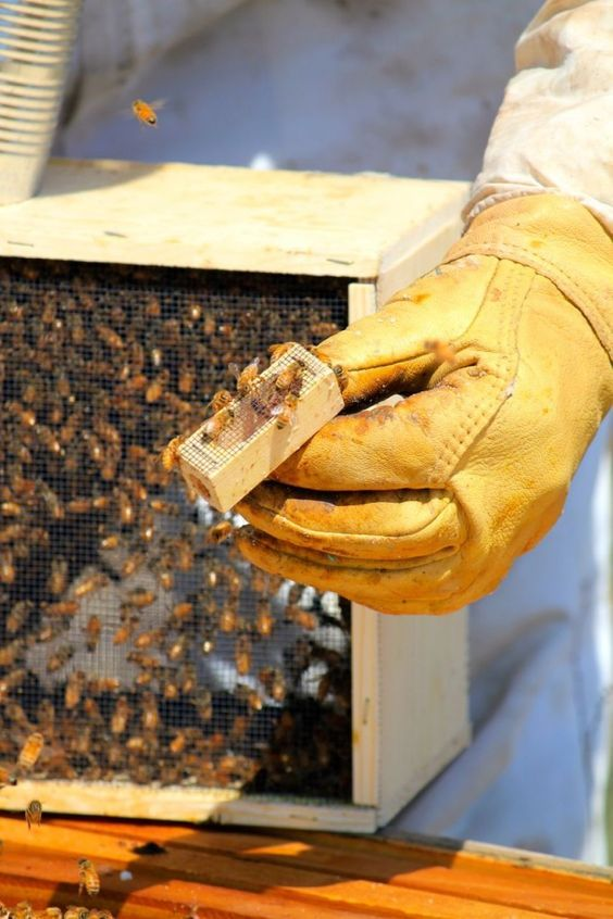 How to Get Started with Honeybees: 8 Simple Steps to Becoming a Beekeeper: