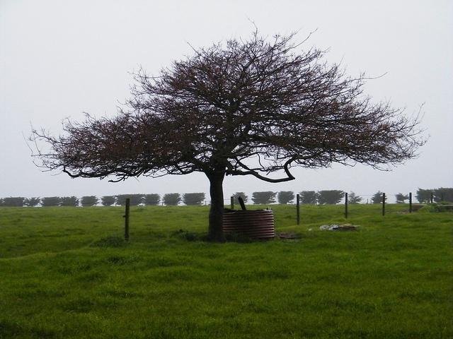 Farmland near Stanley, Northern Tasmania.