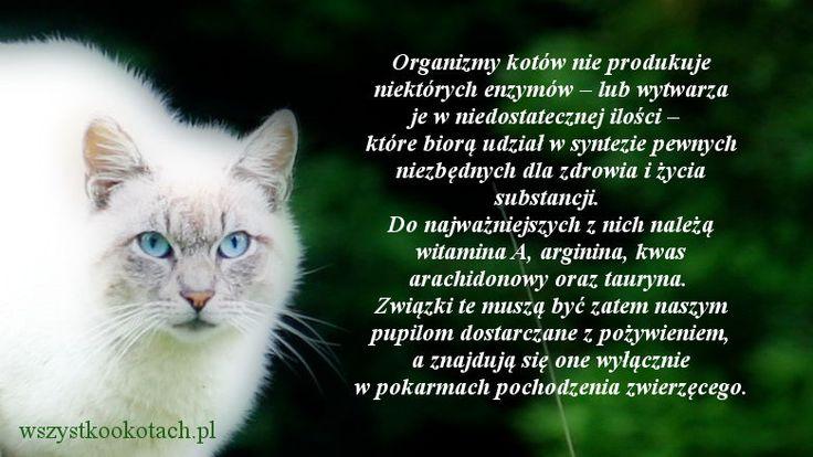 Brak niektórych enzymów u kotów