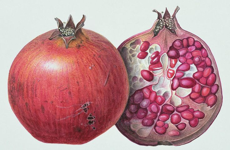 Pomegranate Painting by Margaret Ann Eden - Pomegranate Fine Art Prints and Posters for Sale