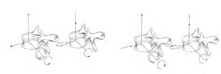Fig. 1. Anterior rotation of the spine during flexion, and posterior rotation during extension. (Grant, 2001; Lee, 2002)