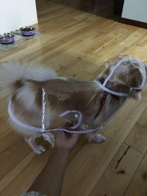 Tienda Online 2015 moda para mascotas perro lluvia chaqueta de la capa ropa perros impermeable capa del perrito chubasquero Rainsuit Chihuahua transparente 5 colores | Aliexpress móvil
