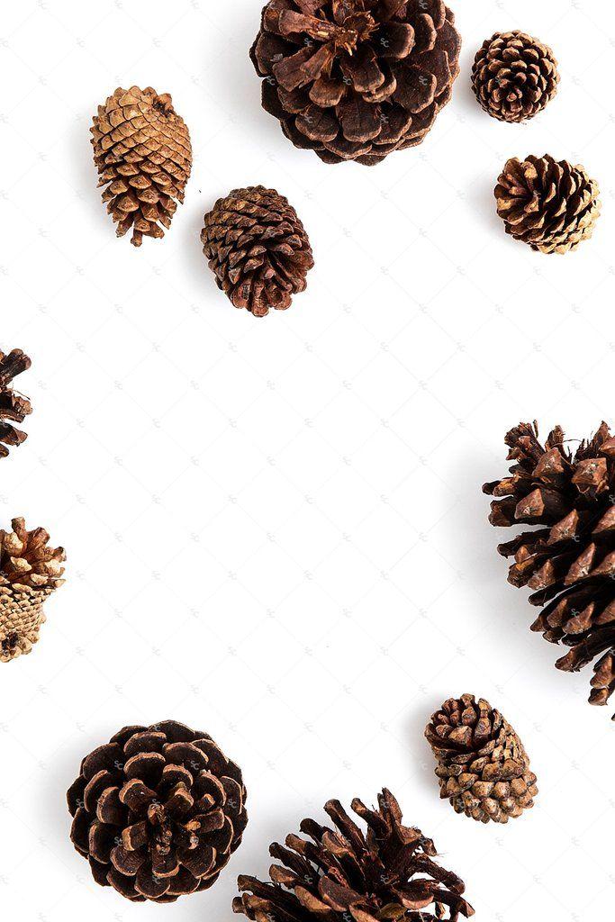 Seasonal Fall Collection #01