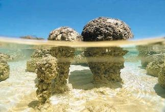 Hamelin Pool. Earliest known life, as early as 3.5 billion years old. These are called stromatolites