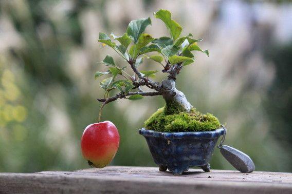 mini bonsai                                                                                                                                                                                 More