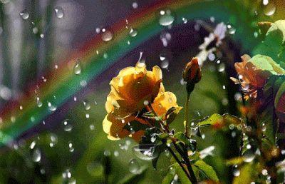 садовые цветы: ЛЕТНЯЯ ГРОЗА