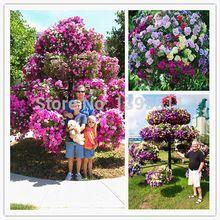 50 nasion/torba rzadko kwiat wolant petunia nasiona petunii drzewo roślin kryty balkon bonsai kwiat róg słodkie ziemniaki kwiat(China (Mainland))
