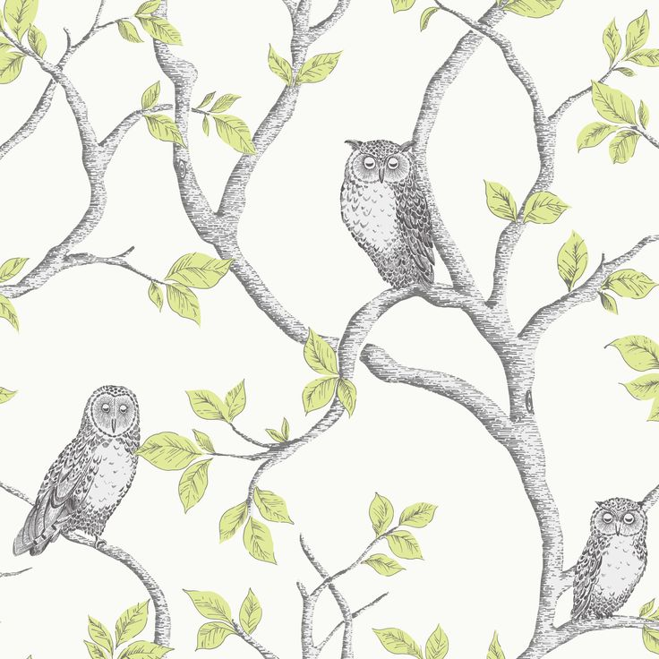 Woodland Owls Green Matt Wallpaper | Departments | DIY at B&Q