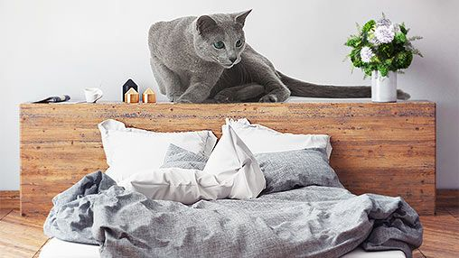 Naklejka na ścianę kot - zobacz też inne kolorowe naklejki na ścianę od bimago!