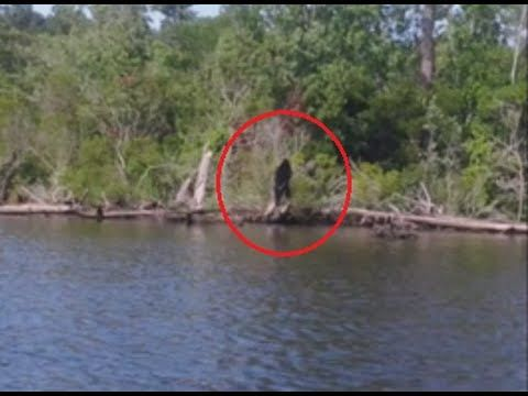 5 Real Bigfoot Encounters/Sighting Reports | The Fortean Slip