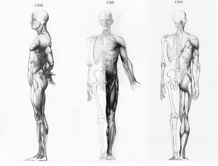 female artistic anatomy | Ortho views from Jeno Barcasay's Anatomy For the Artist