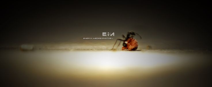 Ant - www.facebook.com/enea.mds