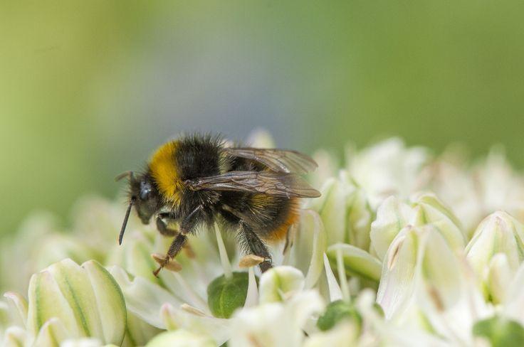 Les étapes à suivre par l'apiculteur pour protéger ses abeilles durant l'hiver.