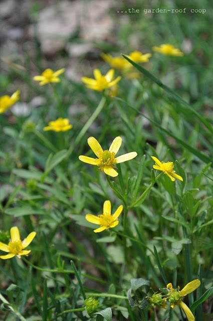Native Identification Plants Oklahoma
