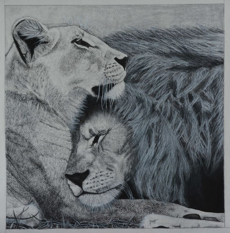 44 Best Images About Tattoos On Pinterest | Animal Drawings A Lion And Lion Drawing