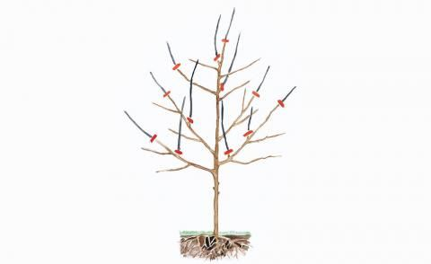 obstbaumschnitt garten pinterest obstbaumschnitt. Black Bedroom Furniture Sets. Home Design Ideas