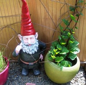 Have you tried Red Malabar Spinach? - Gardening Jones