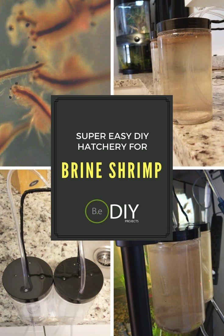 Super Easy Diy Brine Shrimp Hatchery Brine Shrimp Aquascape Design Fish Hatchery