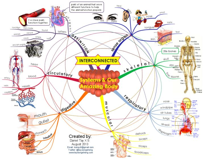 Systems and Our Amazing Body  Free mind map  Midos  Pinterest
