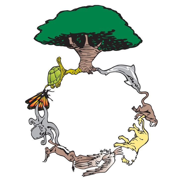 The circle of life, simplified to 8 animals and a tree ...
