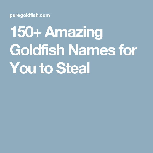 150+ Amazing Goldfish Names for You to Steal