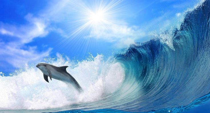Playing Dolphin background wallpapers
