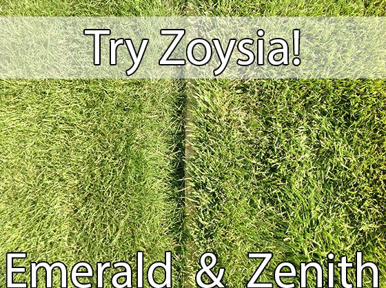 Zoysia Sod - just what our yard needs!  Looking forward to having a lawn one day.