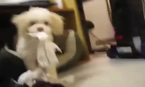 Puppy caught eating paper decides killing witness is the only