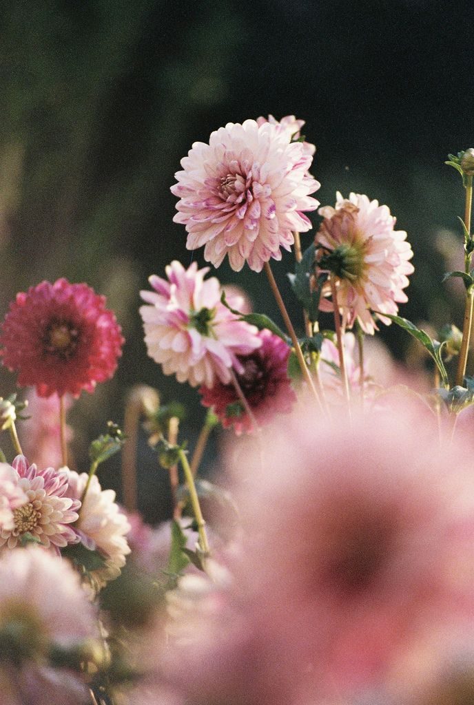 Pink beauties.