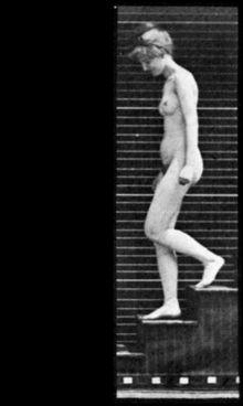 Woman Walking Downstairs (1887), étude photographique composée par Eadweard Muybridge, citée par Duchamp lors d'un entretien — Wikipédia