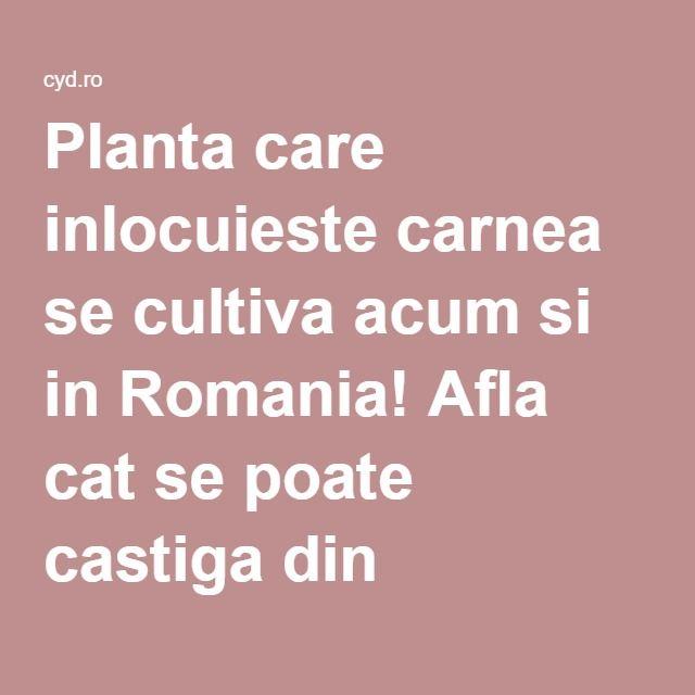 Planta care inlocuieste carnea se cultiva acum si in Romania! Afla cat se poate castiga din plantarea ei! – CYD.RO