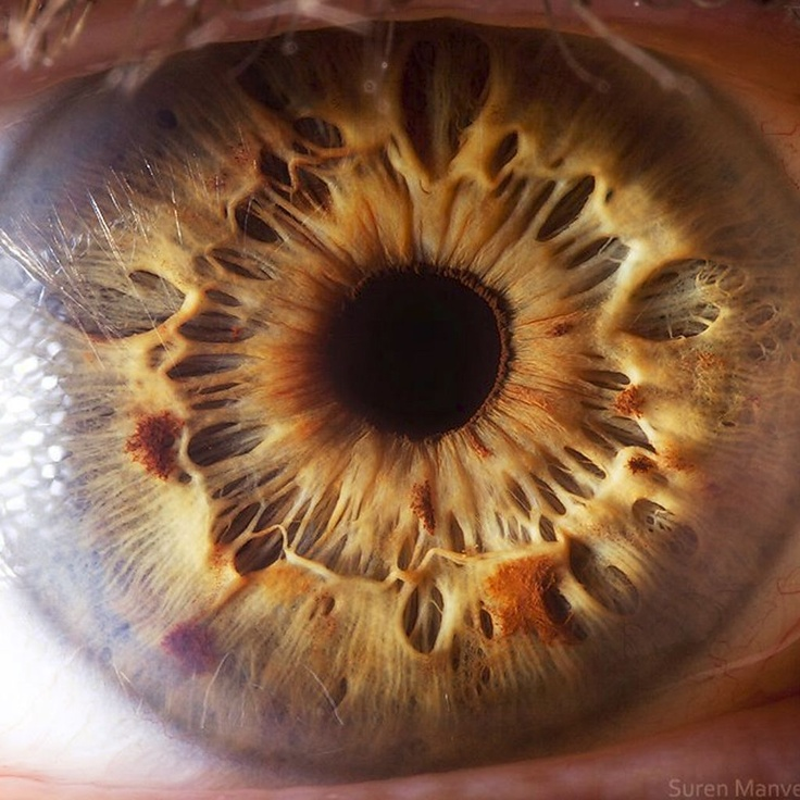 Amazing photos of the human iris and eye!