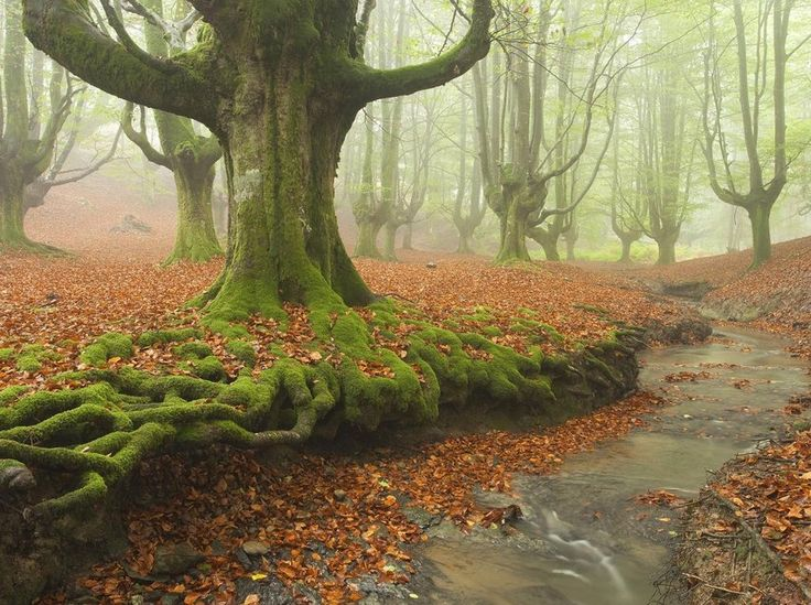 Lovely Roots - Nature