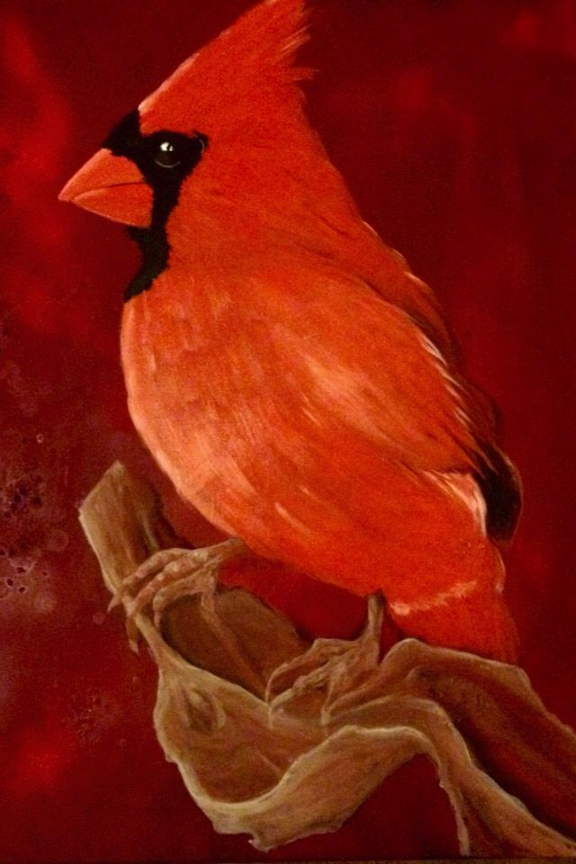 Red Cardinal, oil on canvas, 80x60cm, painting by Lucie Nguyen #painting #oil #bird #cardinal #canvas