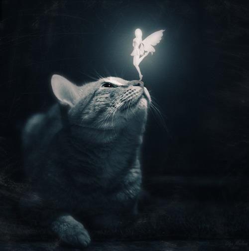 Fantasy ~ Fairy with Cat