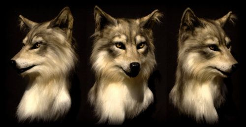 Realistic Wolf Mask | tumblr_libmrzJ4lI1qi343eo1_500.jpg