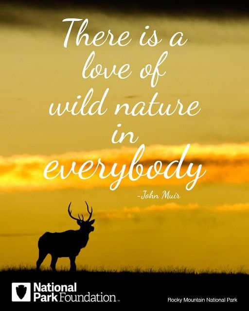 Images Of Nature With Quotes For Facebook: 83 Best Images About Quotes From John Muir On Pinterest